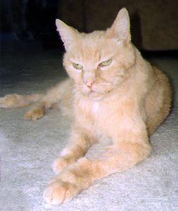 Oscar at 23